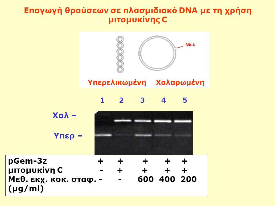 Επαγωγή θραύσεων σε πλασμιδιακό DNA με τη χρήση μιτομυκίνης C pGem-3z + + + + + μιτομυκίνη C - + + + + Μεθ. εκχ. κοκ. σταφ. - - 600 400 200 (μg/ml) Χα