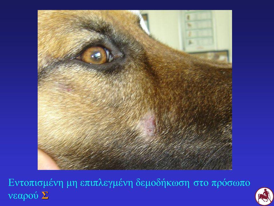 Συμπτώματα τοξίκωσης: μυδρίαση, σιελόρροια, λήθαργος, αταξία, μυϊκός τρόμος, κώμα Εμφάνιση: ευαίσθητα ζώα: άμεσα λιγότερο ευαίσθητα ζώα: σε εβδομάδες-μήνες Προοδευτικό σχήμα (ζώα μη ευαίσθητων φυλών): 100 200 300 400 500 600μg/Kg Παρενέργειεςδιακοπή ιβερμεκτίνης υποχώρηση συμπτωμάτων σε 24-48 ώρες Πριν χορηγηθεί: Knott's test ΙΒΕΡΜΕΚΤΙΝΗ (ΙΙ)