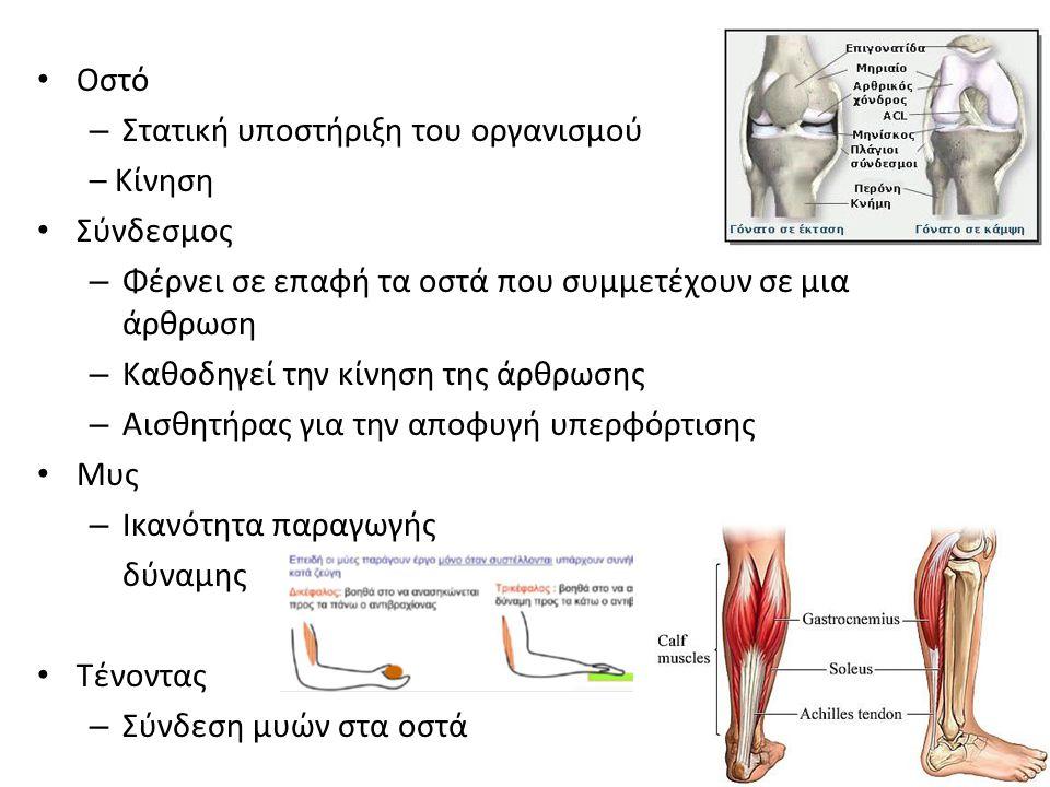 Οστό – Στατική υποστήριξη του οργανισμού – Κίνηση Σύνδεσμος – Φέρνει σε επαφή τα οστά που συμμετέχουν σε μια άρθρωση – Καθοδηγεί την κίνηση της άρθρωσ