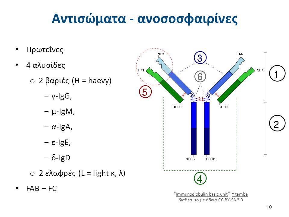 Αντισώματα - ανοσοσφαιρίνες Πρωτεΐνες 4 αλυσίδες o 2 βαριές (H = haevy) ‒γ-IgG, ‒μ-IgM, ‒α-IgA, ‒ε-IgE, ‒δ-IgD o 2 ελαφρές (L = light κ, λ) FAB – FC 1
