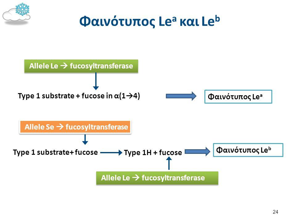 Φαινότυπος Le a και Le b Type 1 substrate + fucose in α(1→4) Allele Le  fucosyltransferase Φαινότυπος Le a Type 1H + fucose Type 1 substrate+ fucose