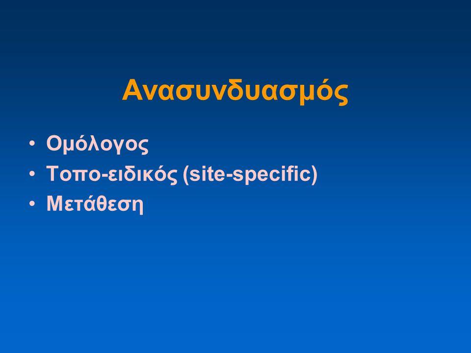 Ανασυνδυασμός Ομόλογος Τοπο-ειδικός (site-specific) Μετάθεση