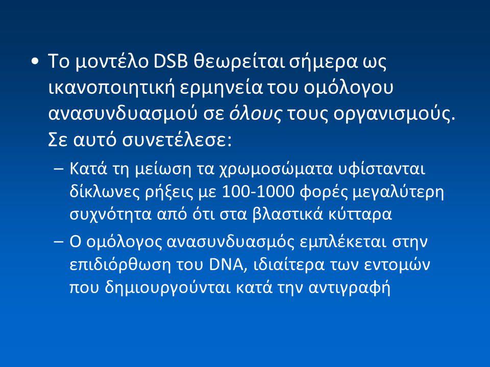 Το μοντέλο DSB θεωρείται σήμερα ως ικανοποιητική ερμηνεία του ομόλογου ανασυνδυασμού σε όλους τους οργανισμούς. Σε αυτό συνετέλεσε: –Κατά τη μείωση τα