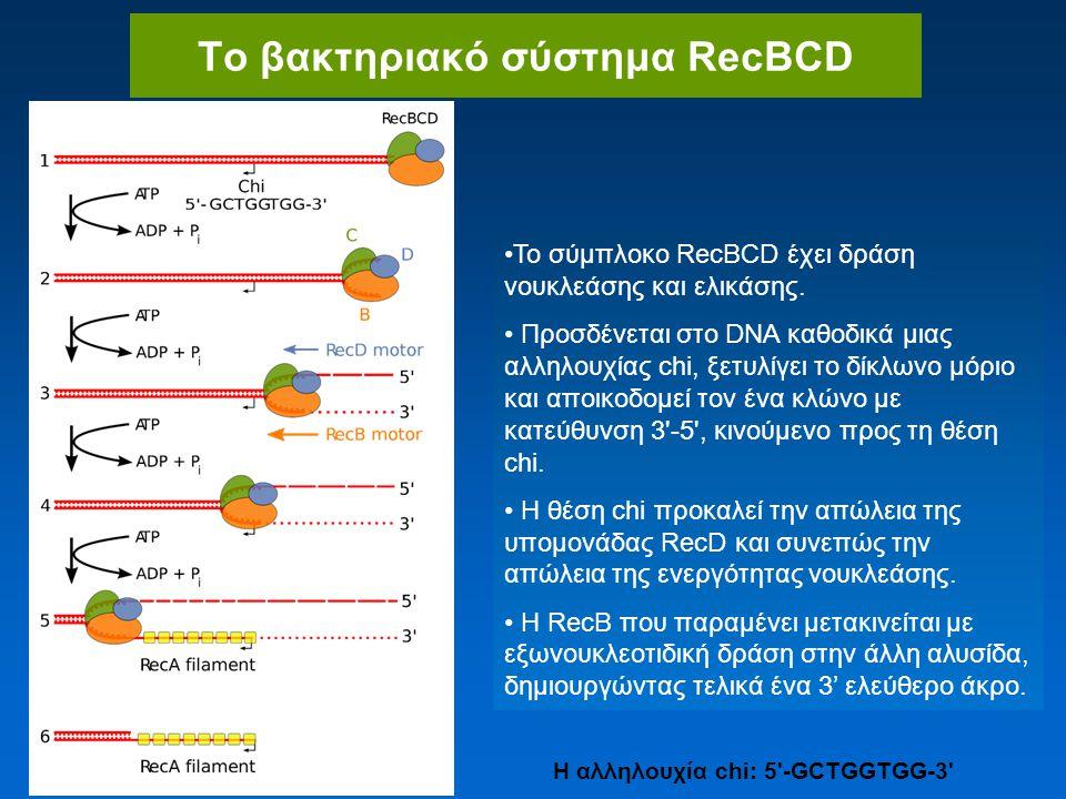 Το βακτηριακό σύστημα RecBCD H αλληλουχία chi: 5 -GCTGGTGG-3 Το σύμπλοκο RecBCD έχει δράση νουκλεάσης και ελικάσης.
