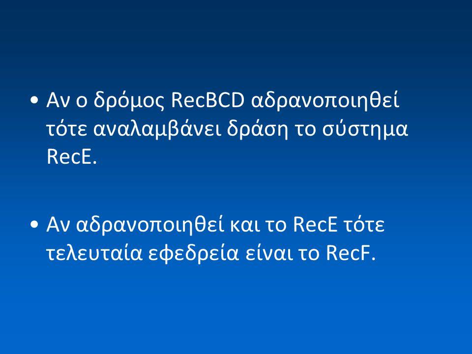 Αν ο δρόμος RecBCD αδρανοποιηθεί τότε αναλαμβάνει δράση το σύστημα RecE. Αν αδρανοποιηθεί και το RecE τότε τελευταία εφεδρεία είναι το RecF.