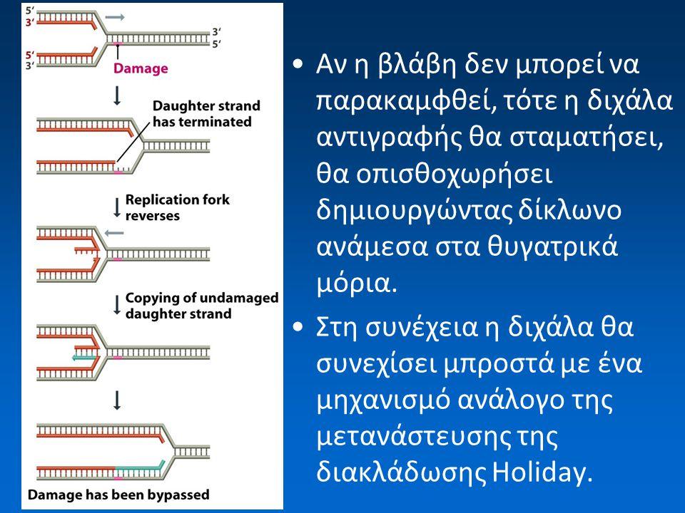 Αν η βλάβη δεν μπορεί να παρακαμφθεί, τότε η διχάλα αντιγραφής θα σταματήσει, θα οπισθοχωρήσει δημιουργώντας δίκλωνο ανάμεσα στα θυγατρικά μόρια.