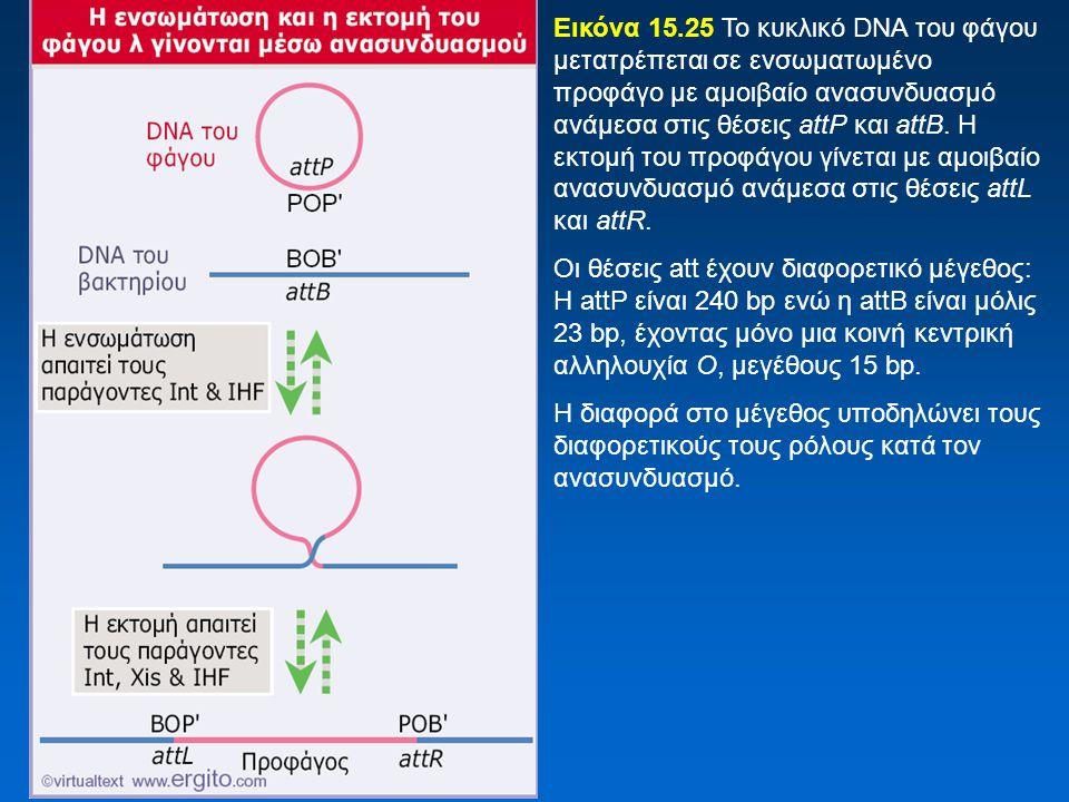 Εικόνα 15.25 Το κυκλικό DNA του φάγου μετατρέπεται σε ενσωματωμένο προφάγο με αμοιβαίο ανασυνδυασμό ανάμεσα στις θέσεις attP και attB. Η εκτομή του πρ