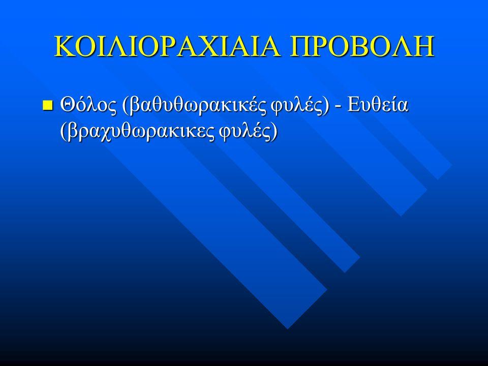 ΚΟΙΛΙΟΡΑΧΙΑΙΑ ΠΡΟΒΟΛΗ Θόλος (βαθυθωρακικές φυλές) - Ευθεία (βραχυθωρακικες φυλές) Θόλος (βαθυθωρακικές φυλές) - Ευθεία (βραχυθωρακικες φυλές)