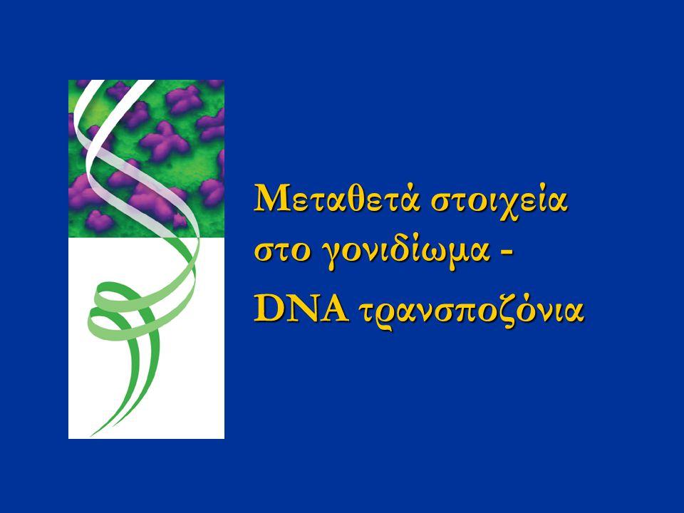Μεταθετά στοιχεία στο γονιδίωμα - DNA τρανσποζόνια