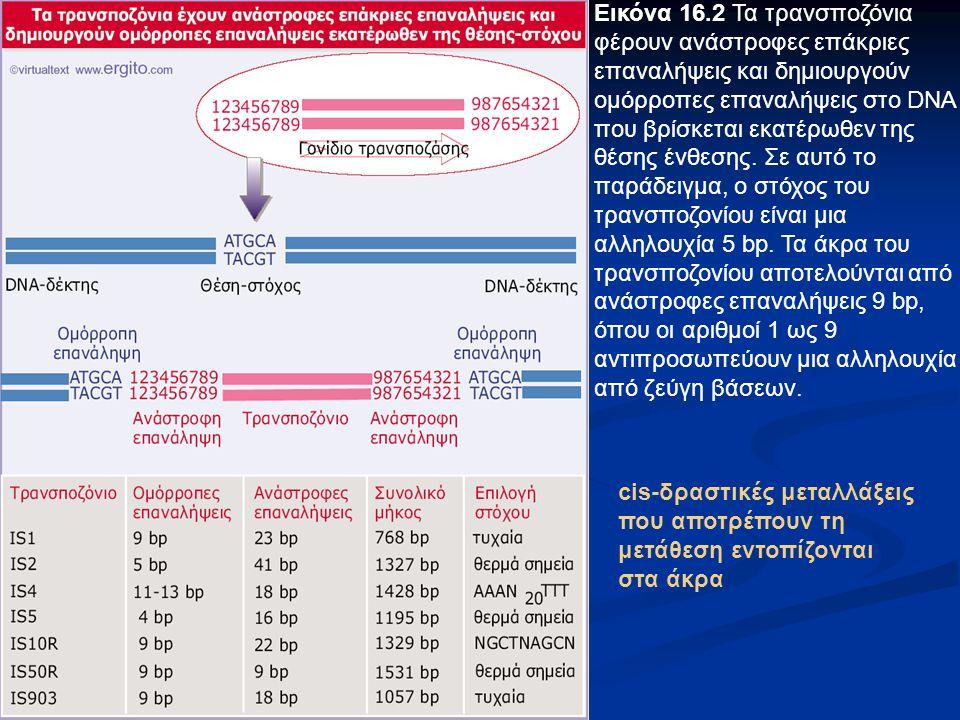 Εικόνα 16.2 Τα τρανσποζόνια φέρουν ανάστροφες επάκριες επαναλήψεις και δημιουργούν ομόρροπες επαναλήψεις στο DNA που βρίσκεται εκατέρωθεν της θέσης έν