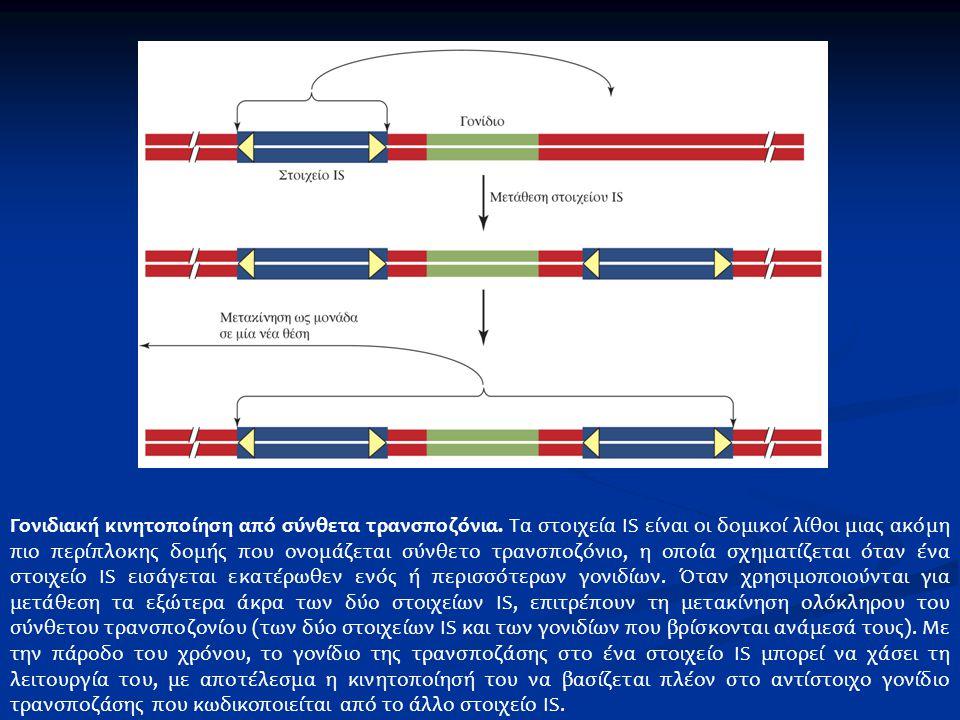 Γονιδιακή κινητοποίηση από σύνθετα τρανσποζόνια. Τα στοιχεία IS είναι οι δομικοί λίθοι μιας ακόμη πιο περίπλοκης δομής που ονομάζεται σύνθετο τρανσποζ