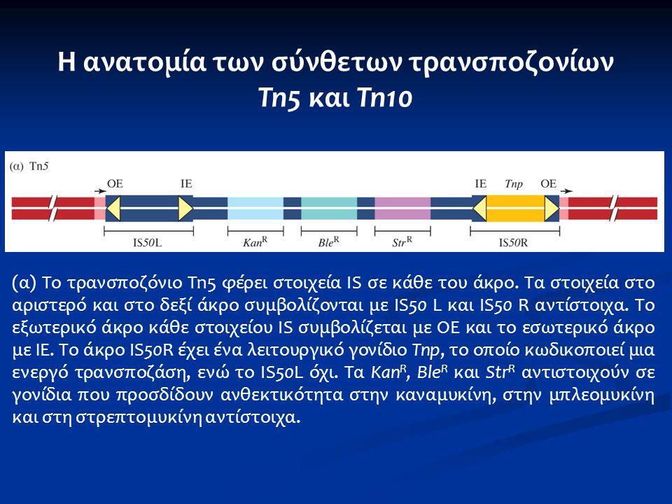 (α) Το τρανσποζόνιο Tn5 φέρει στοιχεία IS σε κάθε του άκρο. Τα στοιχεία στο αριστερό και στο δεξί άκρο συμβολίζονται με IS50 L και IS50 R αντίστοιχα.