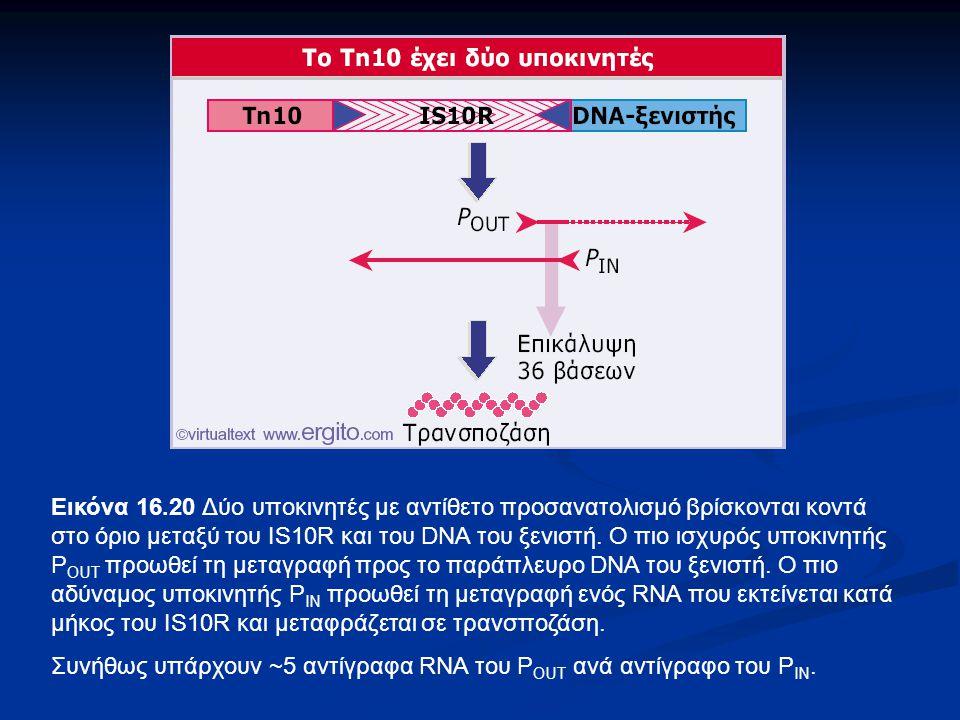 Εικόνα 16.20 Δύο υποκινητές με αντίθετο προσανατολισμό βρίσκονται κοντά στο όριο μεταξύ του IS10R και του DNA του ξενιστή. Ο πιο ισχυρός υποκινητής P