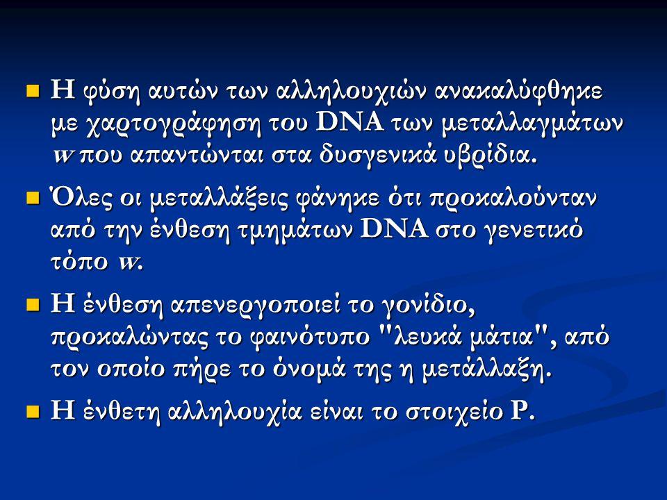 Η φύση αυτών των αλληλουχιών ανακαλύφθηκε με χαρτογράφηση του DNA των μεταλλαγμάτων w που απαντώνται στα δυσγενικά υβρίδια. Η φύση αυτών των αλληλουχι