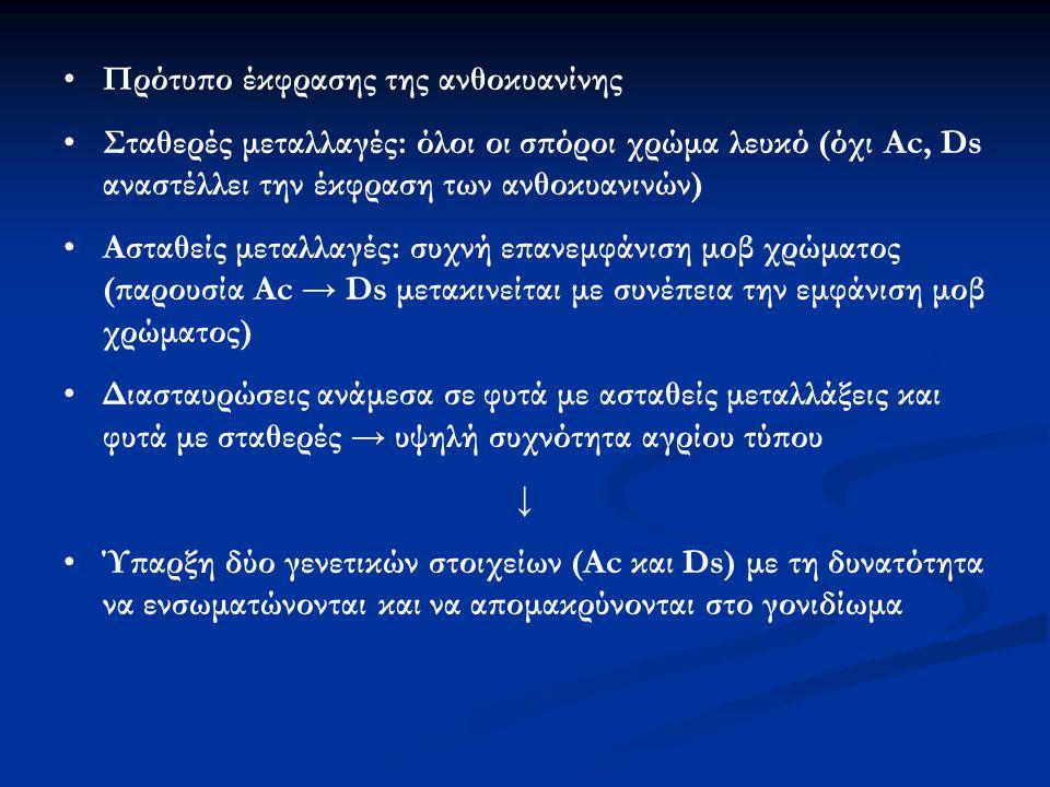 Πρότυπο έκφρασης της ανθοκυανίνης Σταθερές μεταλλαγές: όλοι οι σπόροι χρώμα λευκό (όχι Αc, Ds αναστέλλει την έκφραση των ανθοκυανινών) Ασταθείς μεταλλ