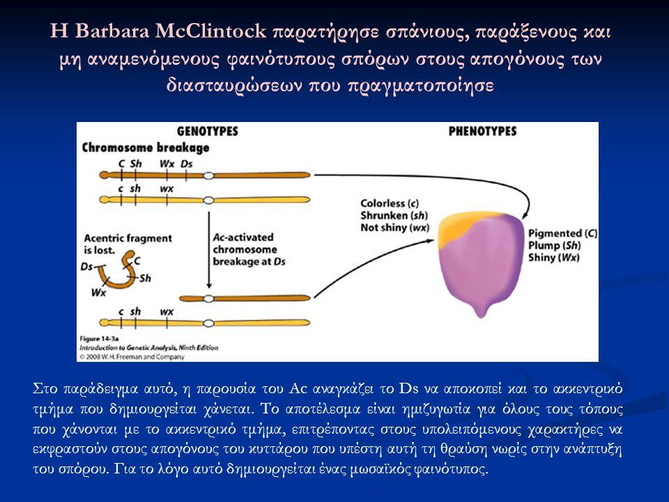 Στο παράδειγμα αυτό, η παρουσία του Ac αναγκάζει το Ds να αποκοπεί και το ακκεντρικό τμήμα που δημιουργείται χάνεται. Το αποτέλεσμα είναι ημιζυγωτία γ