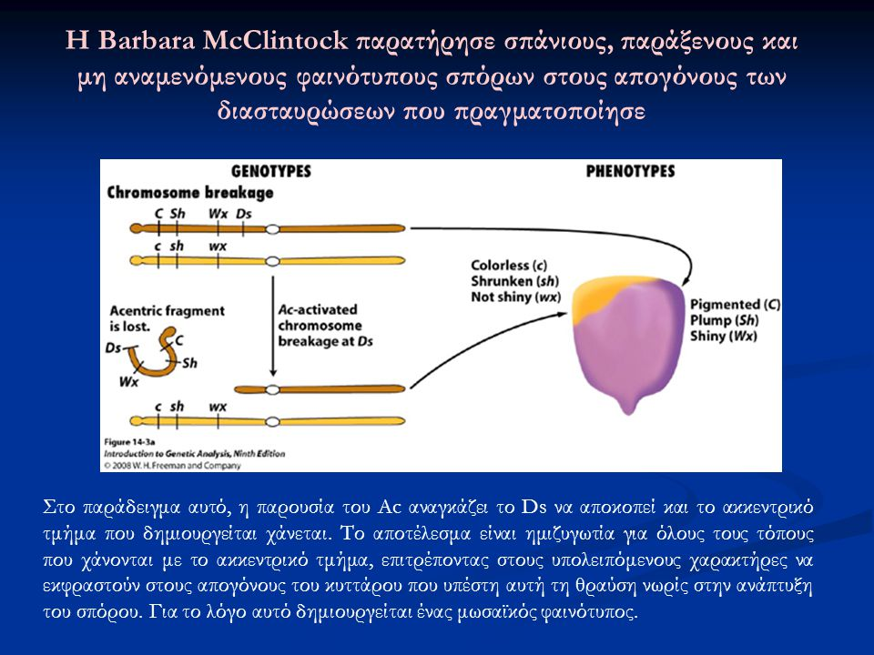Genes VIII - Ακαδημαϊκές Εκδόσεις 2004 Εικόνα 16.21 Πολλοί μηχανισμοί περιορίζουν τη συχνότητα μετάθεσης του Tn10, επηρεάζοντας είτε τη σύνθεση είτε τη λειτουργία της τρανσποζάσης.