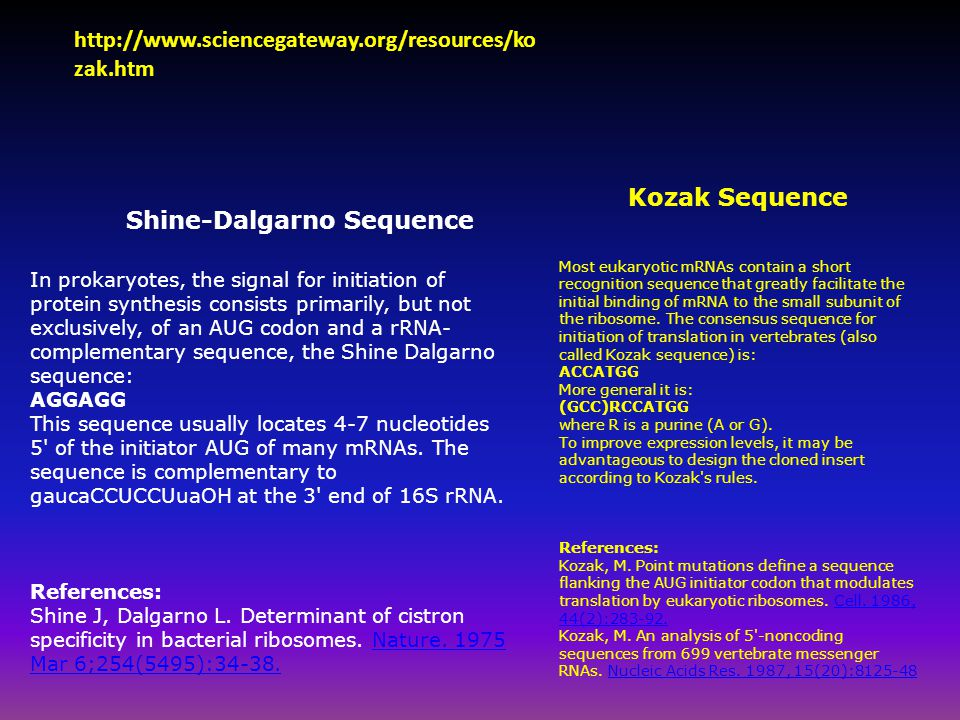 Kozak Sequence Most eukaryotic mRNAs contain a short recognition sequence that greatly facilitate the initial binding of mRNA to the small subunit of the ribosome.