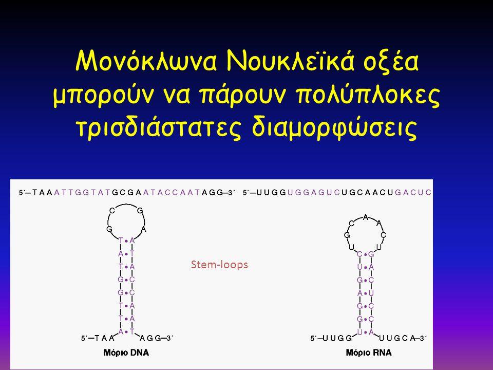 Μονόκλωνα Νουκλεϊκά οξέα μπορούν να πάρουν πολύπλοκες τρισδιάστατες διαμορφώσεις Stem-loops