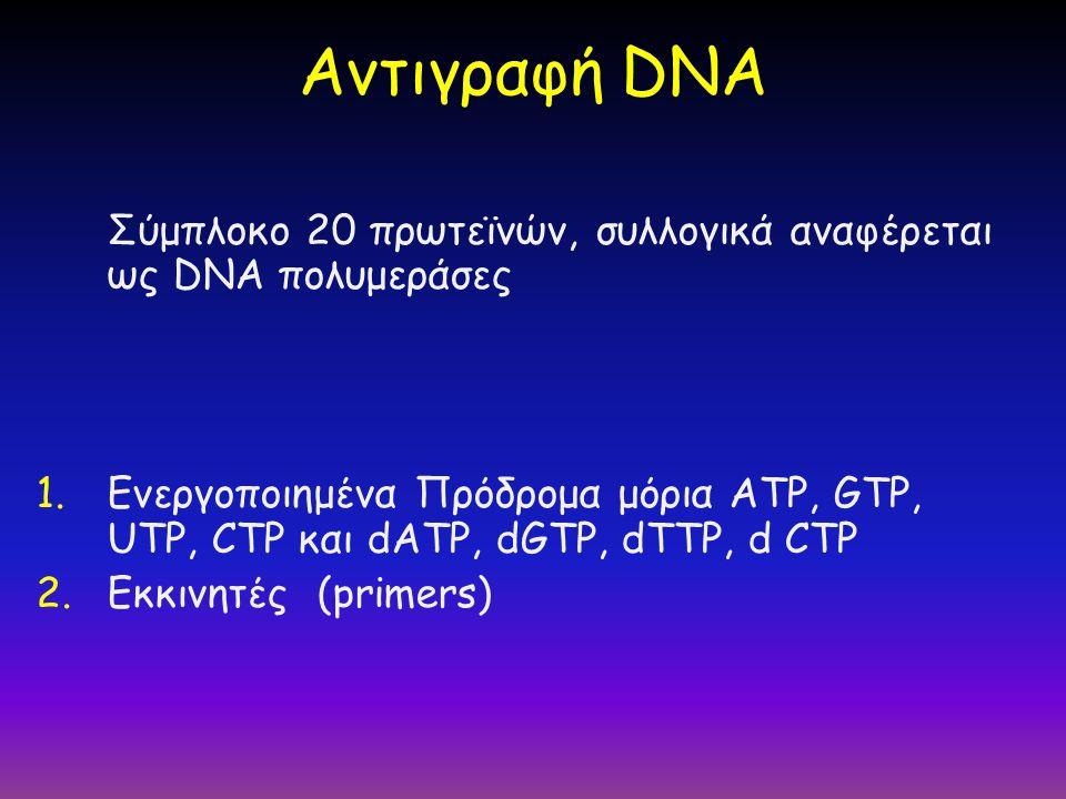 Σύμπλοκο 20 πρωτεϊνών, συλλογικά αναφέρεται ως DNA πολυμεράσες 1.Ενεργοποιημένα Πρόδρομα μόρια ATP, GTP, UTP, CTP και dATP, dGTP, dTTP, d CTP 2.Εκκινη