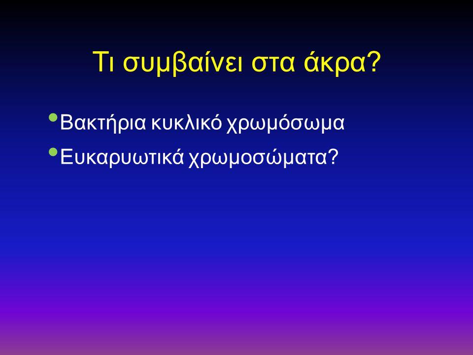 Τι συμβαίνει στα άκρα? Βακτήρια κυκλικό χρωμόσωμα Ευκαρυωτικά χρωμοσώματα?