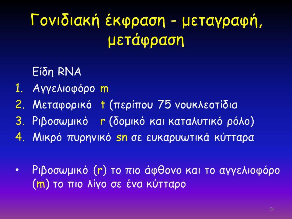 54 Γονιδιακή έκφραση - μεταγραφή, μετάφραση Είδη RNA 1.Αγγελιοφόρο m 2.Μεταφορικό t (περίπου 75 νουκλεοτίδια 3.Ριβοσωμικό r (δομικό και καταλυτικό ρόλ