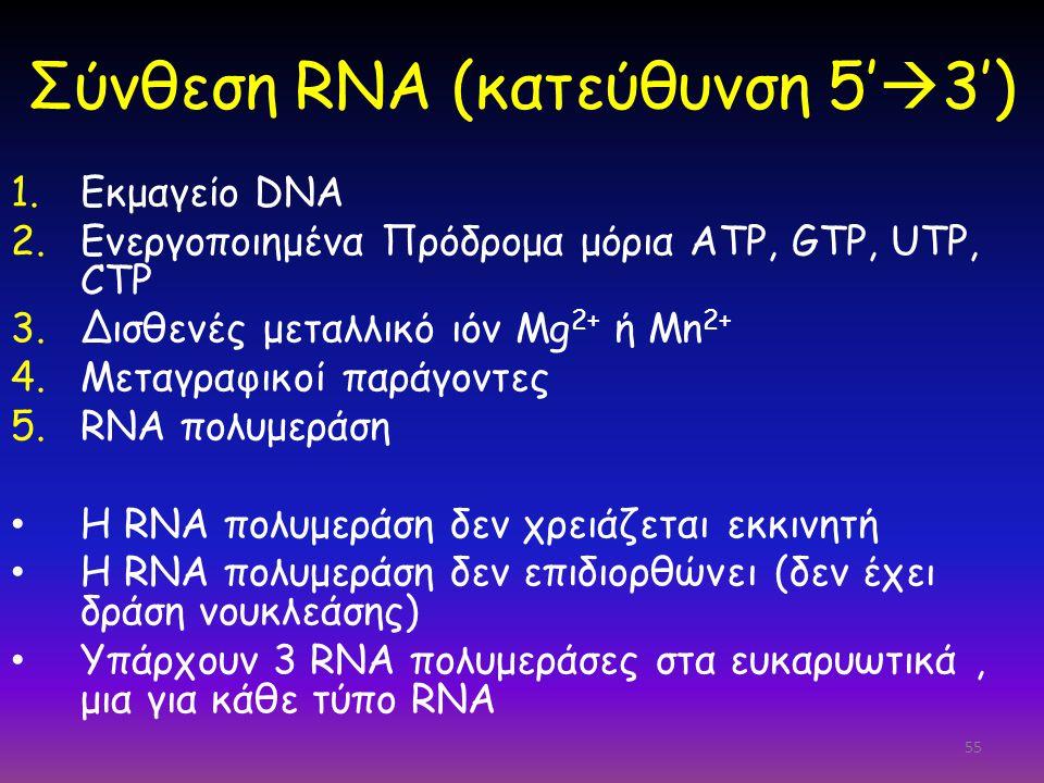 55 Σύνθεση RNA (κατεύθυνση 5'  3') 1.Εκμαγείο DNA 2.Ενεργοποιημένα Πρόδρομα μόρια ATP, GTP, UTP, CTP 3.Δισθενές μεταλλικό ιόν Mg 2+ ή Mn 2+ 4.Μεταγρα