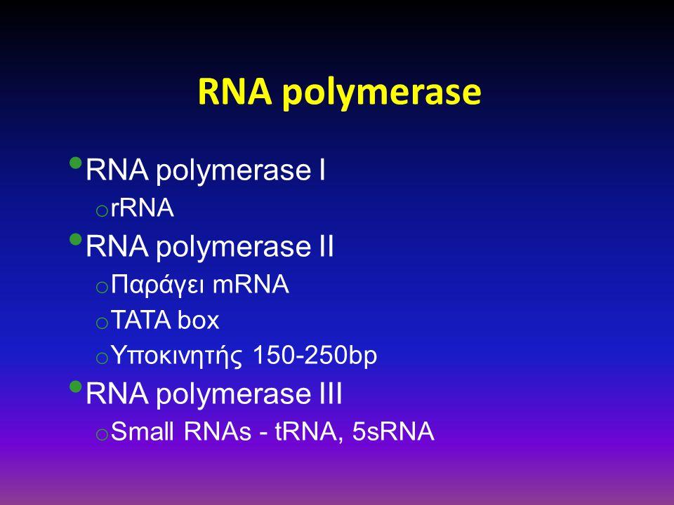 RNA polymerase RNA polymerase Ι o rRNA RNA polymerase ΙΙ o Παράγει mRNA o TATA box o Υποκινητής 150-250bp RNA polymerase ΙΙΙ o Small RNAs - tRNA, 5sRN