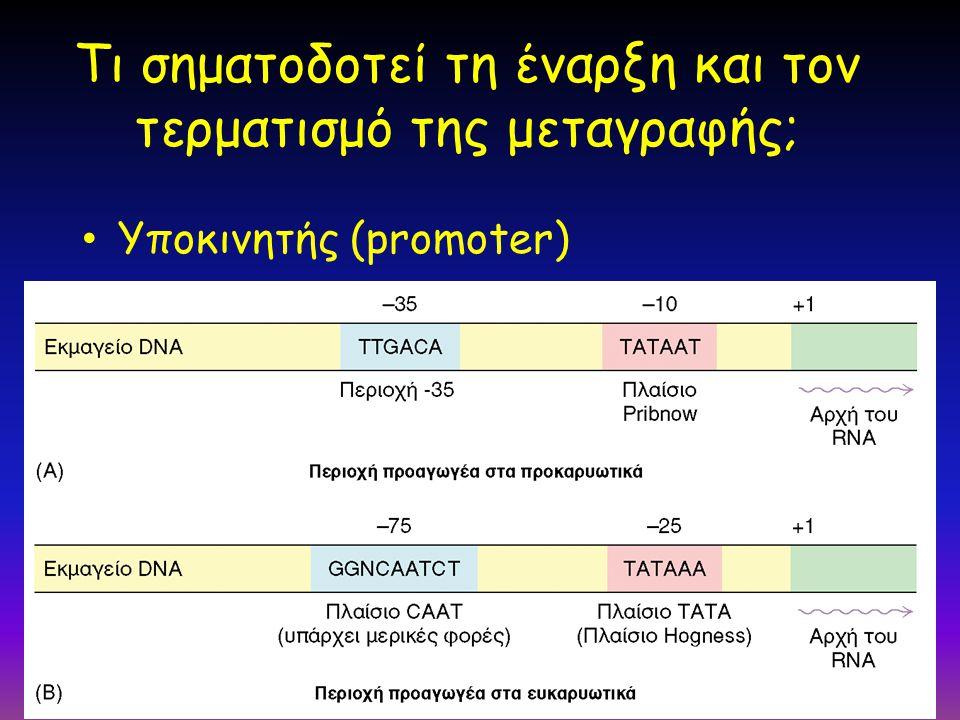 61 Τι σηματοδοτεί τη έναρξη και τον τερματισμό της μεταγραφής; Υποκινητής (promoter)