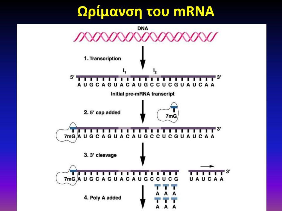 Ωρίμανση του mRNA