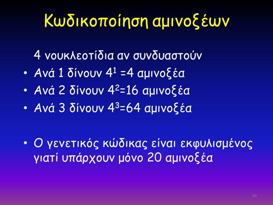 94 Κωδικοποίηση αμινοξέων 4 νουκλεοτίδια αν συνδυαστούν Ανά 1 δίνουν 4 1 =4 αμινοξέα Ανά 2 δίνουν 4 2 =16 αμινοξέα Ανά 3 δίνουν 4 3 =64 αμινοξέα Ο γεν
