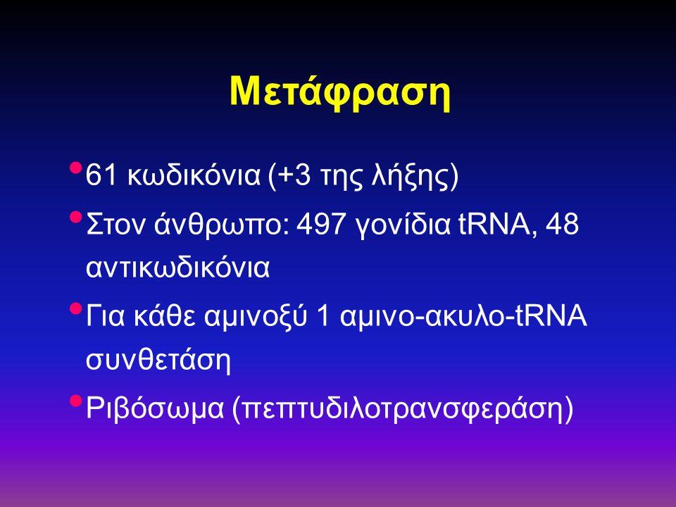 Μετάφραση 61 κωδικόνια (+3 της λήξης) Στον άνθρωπο: 497 γονίδια tRNA, 48 αντικωδικόνια Για κάθε αμινοξύ 1 αμινο-ακυλο-tRNA συνθετάση Ριβόσωμα (πεπτυδι