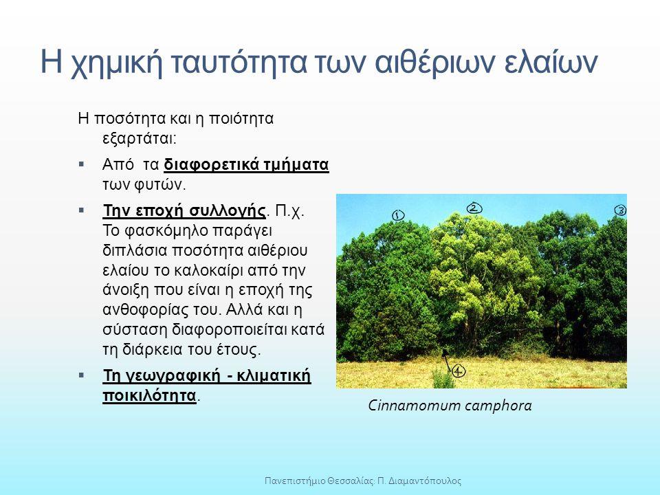 Η χημική ταυτότητα των αιθέριων ελαίων Η ποσότητα και η ποιότητα εξαρτάται:  Από τα διαφορετικά τμήματα των φυτών.  Την εποχή συλλογής. Π.χ. Το φασκ