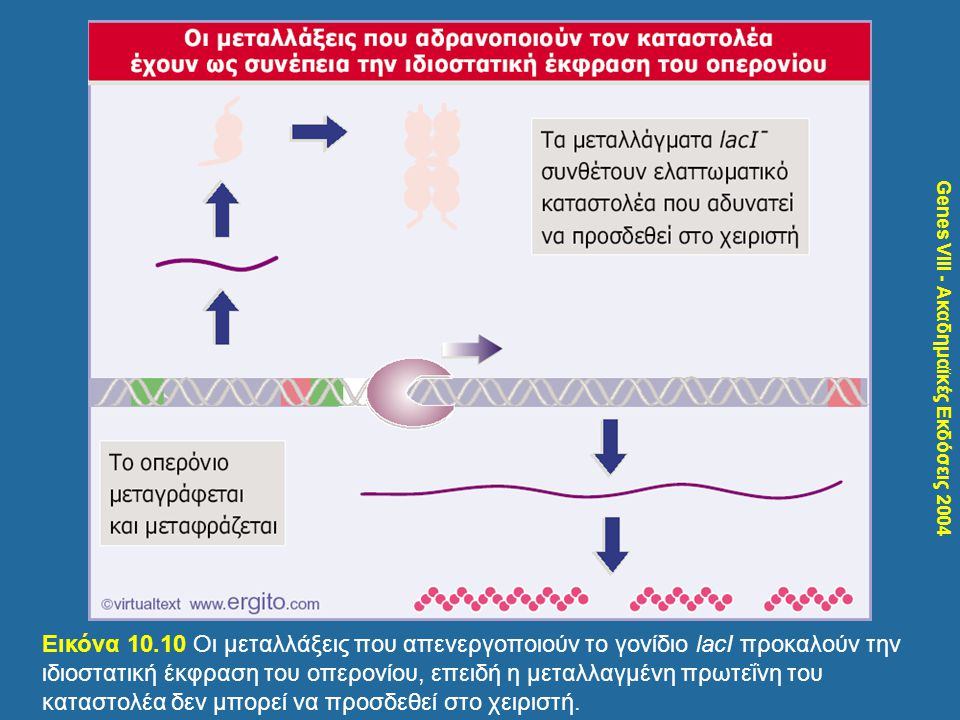 Genes VIII - Ακαδημαϊκές Εκδόσεις 2004 Εικόνα 10.10 Οι μεταλλάξεις που απενεργοποιούν το γονίδιο lacI προκαλούν την ιδιοστατική έκφραση του οπερονίου,