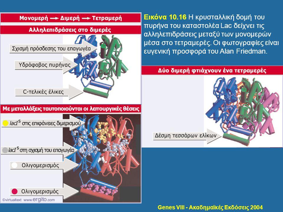 Genes VIII - Ακαδημαϊκές Εκδόσεις 2004 Εικόνα 10.16 Η κρυσταλλική δομή του πυρήνα του καταστολέα Lac δείχνει τις αλληλεπιδράσεις μεταξύ των μονομερών