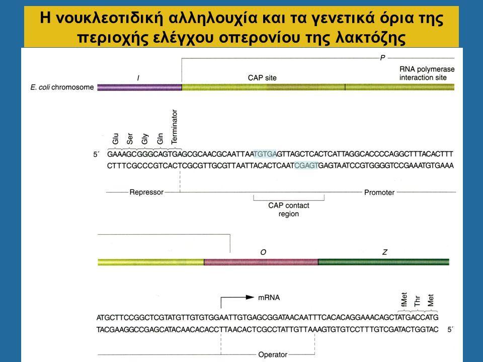 Η νουκλεοτιδική αλληλουχία και τα γενετικά όρια της περιοχής ελέγχου οπερονίου της λακτόζης