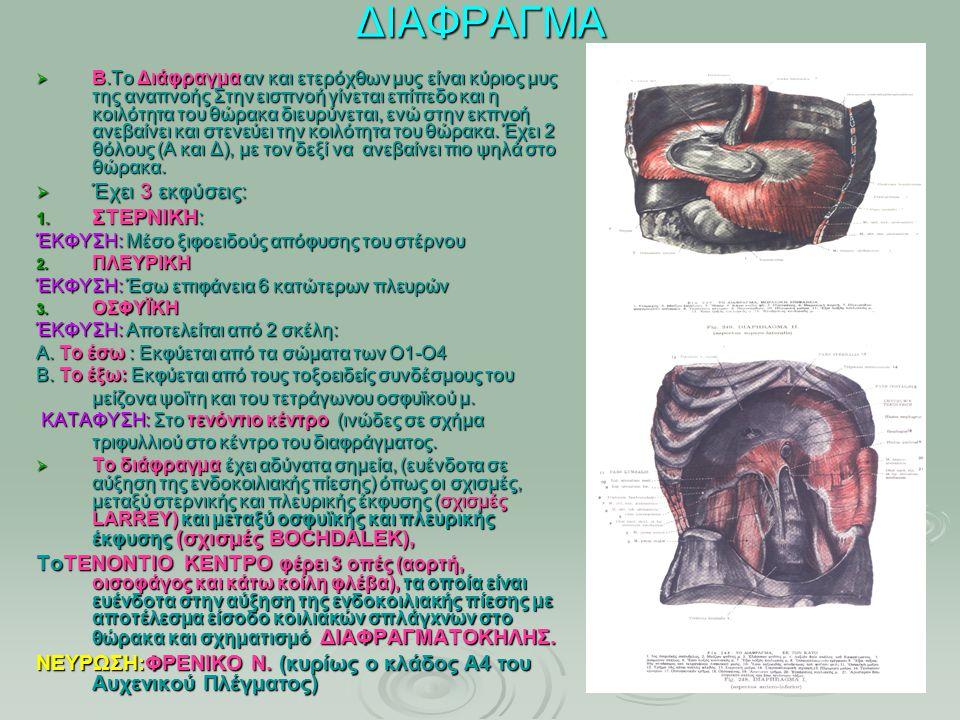 ΔΙΑΦΡΑΓΜΑ  Β.Το Διάφραγμα αν και ετερόχθων μυς είναι κύριος μυς της αναπνοής Στην εισπνοή γίνεται επίπεδο και η κοιλότητα του θώρακα διευρύνεται, ενώ