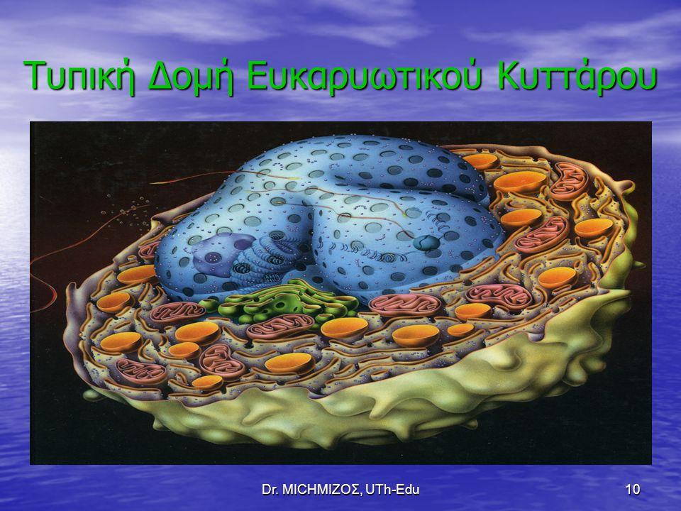 Dr. ΜΙCHΜΙΖΟΣ, UTh-Edu10 Τυπική Δομή Ευκαρυωτικού Κυττάρου