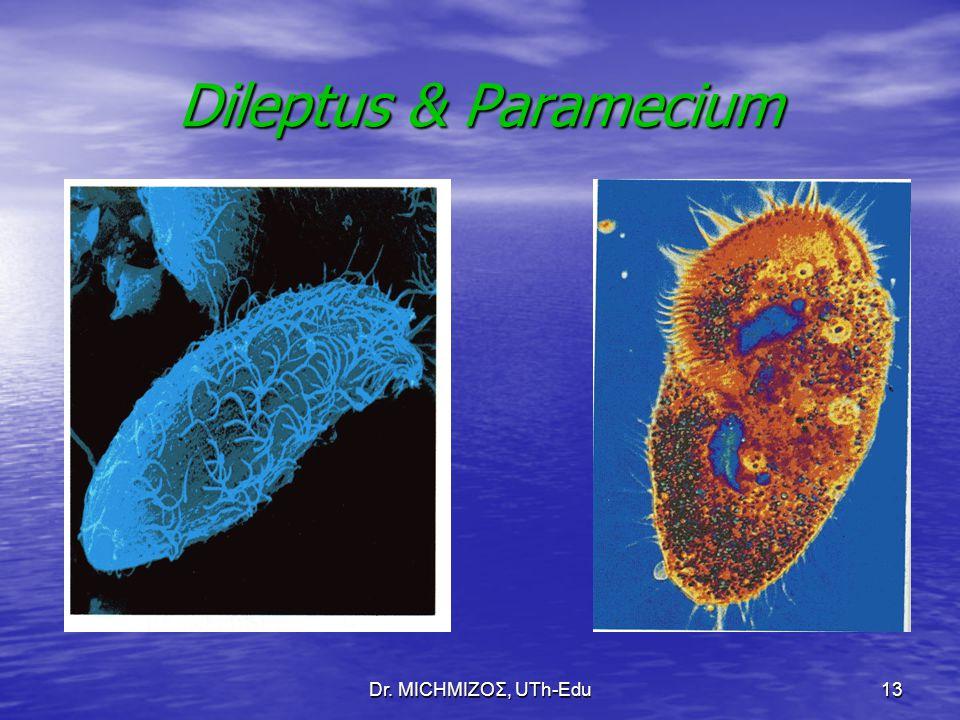 Dr. ΜΙCHΜΙΖΟΣ, UTh-Edu13 Dileptus & Paramecium