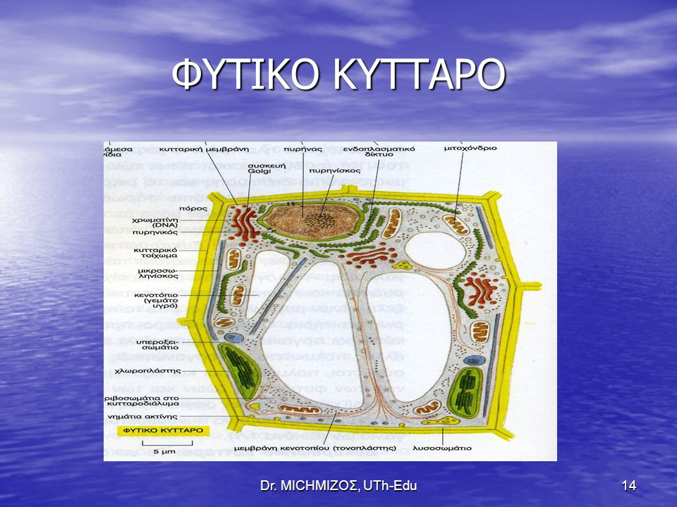 Dr. ΜΙCHΜΙΖΟΣ, UTh-Edu14 ΦΥΤΙΚΟ ΚΥΤΤΑΡΟ