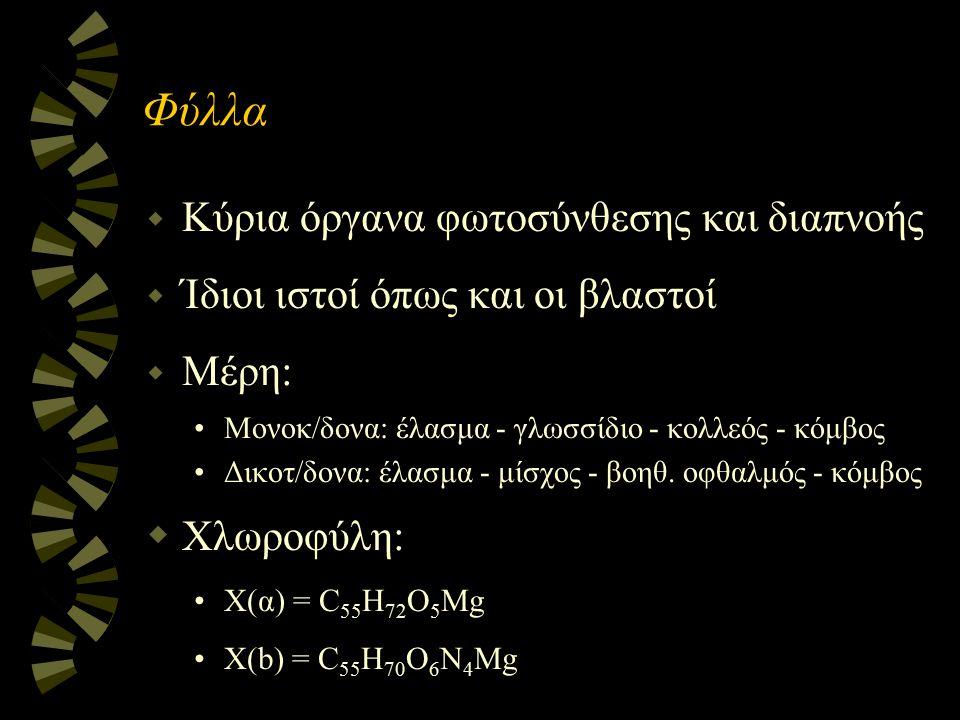 Φύλλα w Κύρια όργανα φωτοσύνθεσης και διαπνοής w Ίδιοι ιστοί όπως και οι βλαστοί w Μέρη: Μονοκ/δονα: έλασμα - γλωσσίδιο - κολλεός - κόμβος Δικοτ/δονα: