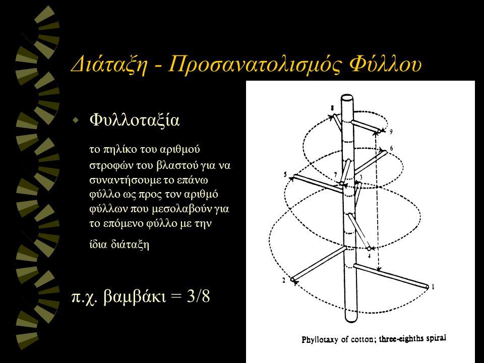 Διάταξη - Προσανατολισμός Φύλλου w Φυλλοταξία το πηλίκο του αριθμού στροφών του βλαστού για να συναντήσουμε το επάνω φύλλο ως προς τον αριθμό φύλλων π