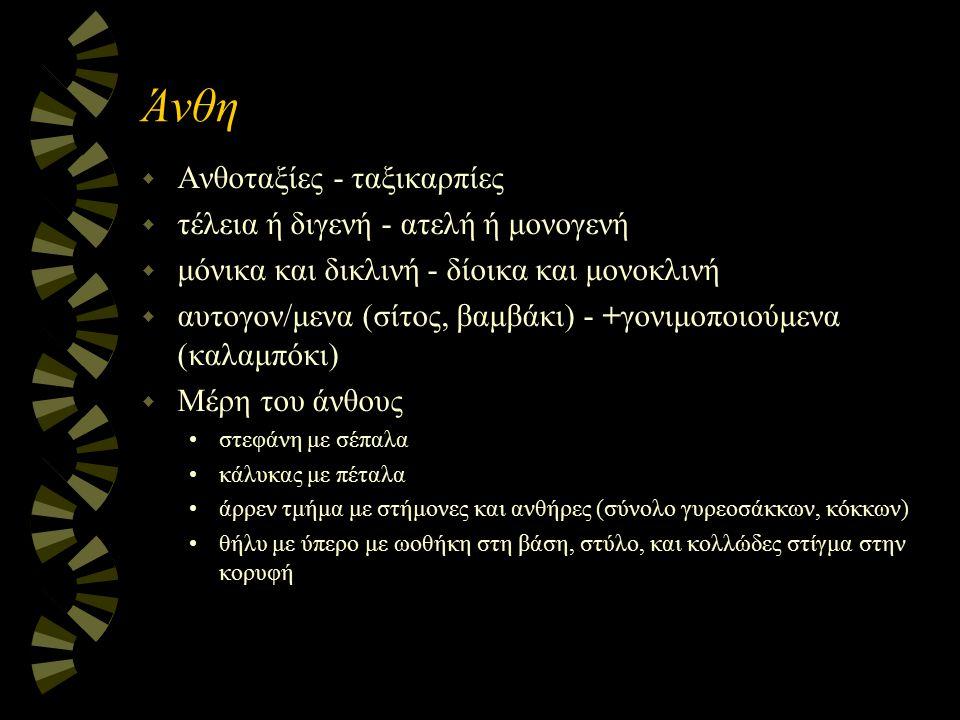 Άνθη w Ανθοταξίες - ταξικαρπίες w τέλεια ή διγενή - ατελή ή μονογενή w μόνικα και δικλινή - δίοικα και μονοκλινή w αυτογον/μενα (σίτος, βαμβάκι) - +γο