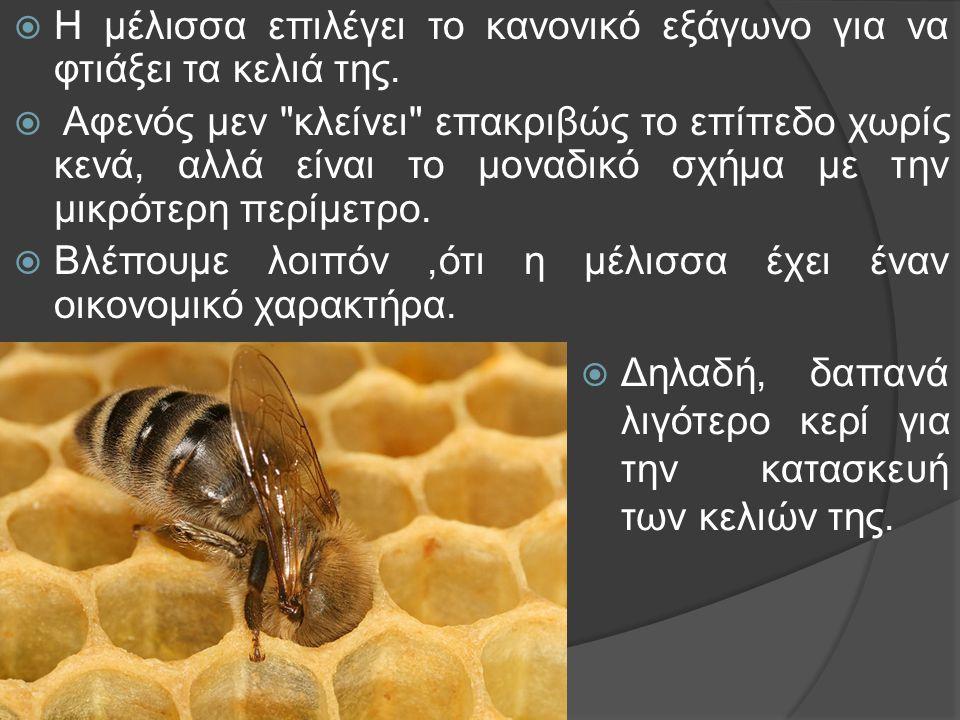  Η μέλισσα επιλέγει το κανονικό εξάγωνο για να φτιάξει τα κελιά της.  Αφενός μεν