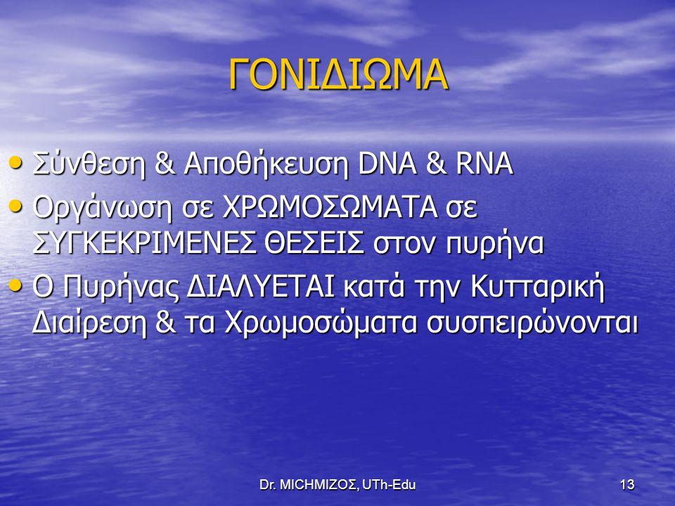 Dr. ΜΙCHΜΙΖΟΣ, UTh-Edu13 ΓΟΝΙΔΙΩΜΑ Σύνθεση & Αποθήκευση DNA & RNA Σύνθεση & Αποθήκευση DNA & RNA Οργάνωση σε ΧΡΩΜΟΣΩΜΑΤΑ σε ΣΥΓΚΕΚΡΙΜΕΝΕΣ ΘΕΣΕΙΣ στον