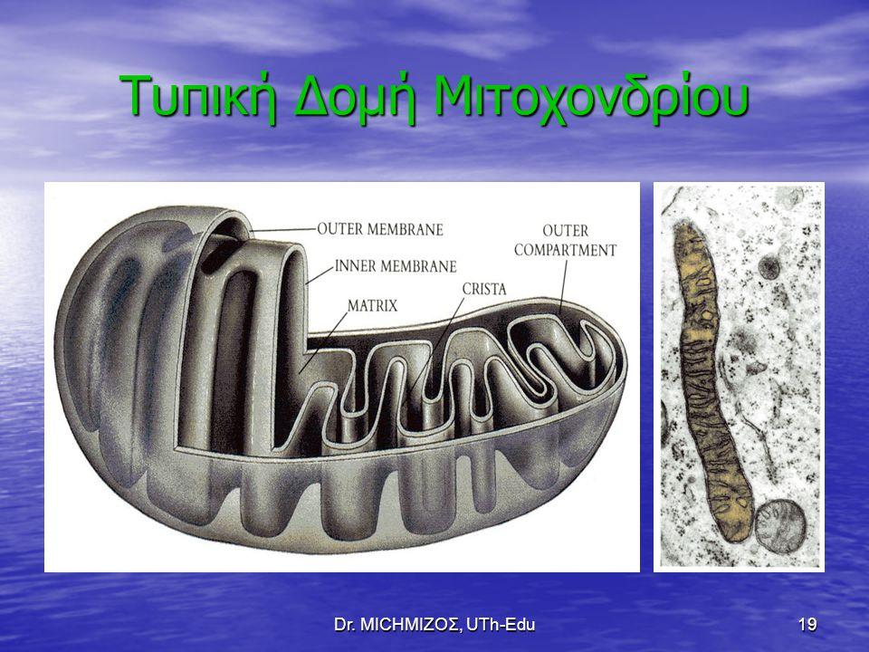 Dr. ΜΙCHΜΙΖΟΣ, UTh-Edu19 Τυπική Δομή Μιτοχονδρίου