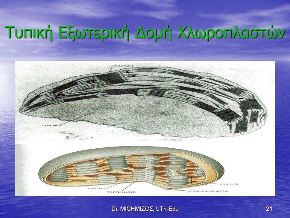 Dr. ΜΙCHΜΙΖΟΣ, UTh-Edu21 Τυπική Εξωτερική Δομή Χλωροπλαστών