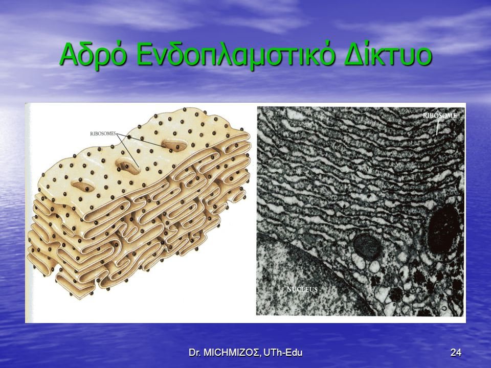 Dr. ΜΙCHΜΙΖΟΣ, UTh-Edu24 Αδρό Ενδοπλαμστικό Δίκτυο