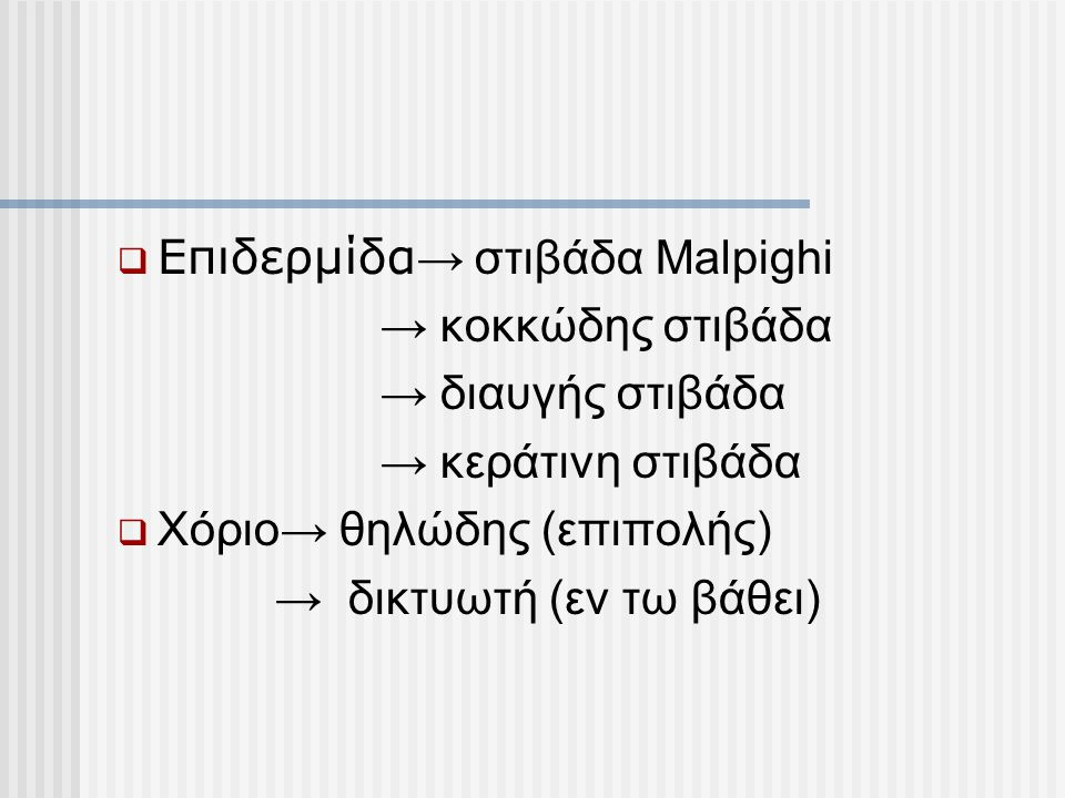  Επιδερμίδα → στιβάδα Μalpighi → κοκκώδης στιβάδα → διαυγής στιβάδα → κεράτινη στιβάδα  Χόριο→ θηλώδης (επιπολής) → δικτυωτή (εν τω βάθει)