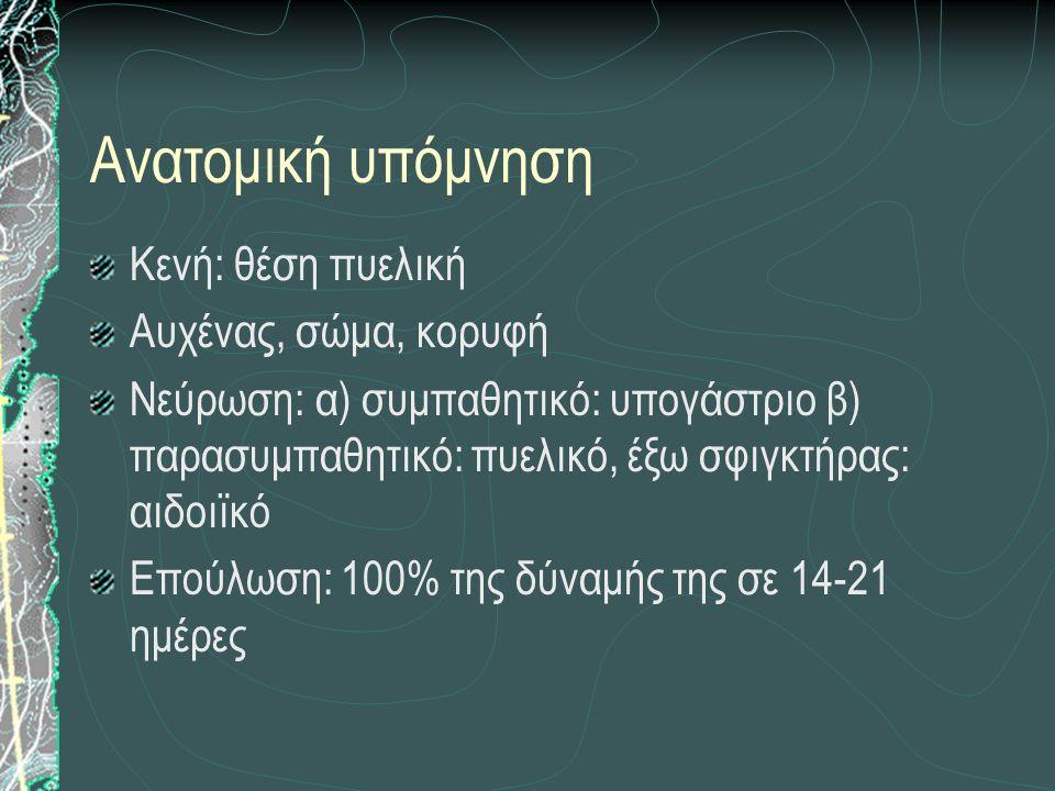 Ανατομική υπόμνηση Κενή: θέση πυελική Αυχένας, σώμα, κορυφή Νεύρωση: α) συμπαθητικό: υπογάστριο β) παρασυμπαθητικό: πυελικό, έξω σφιγκτήρας: αιδοιϊκό
